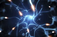 There's hope for new treatments for neurological diseases, after scientists just discovered a link between the mobilisation of mitochondria inside nerve cells, and the cells' subsequent regrowth. The team thinks that kicking the mitochondria into. Neuroplasticity, Neuroscience, Loss Of Balance, Gastroesophageal Reflux Disease, Inflammation Causes, Cupping Therapy, Parenting Styles, Multiple Sclerosis