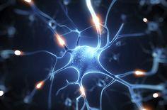 Mózg idzie do szkoły: Centrum Nauki Kopernik