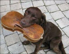 Very bad dog