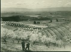 View of the Santa Clara Valley fruit trees in bloom.View of two men admiring the Santa Clara Valley fruit trees in bloom. San Jose California, Northern California, Santa Clara County, Local History, Historical Photos, Vintage Stuff, Vintage Photos, Us Travel, Irrigation