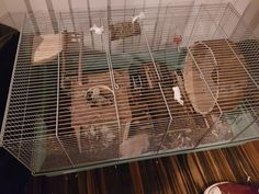 How can I improve my cuties cage? #aww #Cutehamsters #hamster #hamstersofpinterest #boopthesnoot #cuddle #fluffy #animals #aww #socute #derp #cute #bestfriend #itssofluffy #rodents