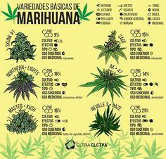 Estas son las seis variedades básicas de la marihuana, su uso medicinal, efectos y las propiedades de cada una. #InfografíaCC