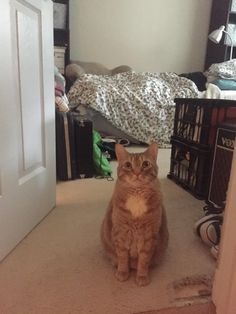 #Cats  #Cat  #Kittens  #Kitten  #Kitty  #Pets  #Pet  #Meow  #Moe  #CuteCats  #CuteCat #CuteKittens #CuteKitten #MeowMoe      Every morning my cat stands in front of my little sister to 'protect' her from i...   http://www.meowmoe.com/45962/