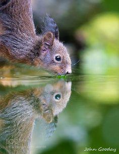 Thirsty work by johngoodayphotography #animals #animal #pet #pets #animales #animallovers #photooftheday #amazing #picoftheday