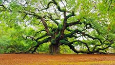 tree - Yahoo Image Search Results