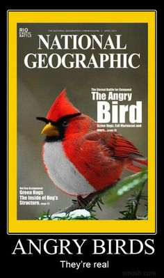Angry Birds. They're real.