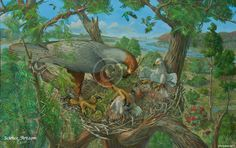 Extinct Haast's Eagle habitat illustration - Illustration@Science-Art.Com