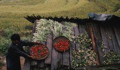 BLOG DO ARRETADINHO: Butão só permitirá agricultura orgânica
