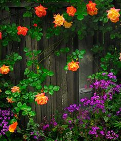 flowers and fences - just love it!