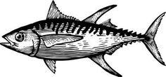 Yellowfin Tuna Clip Art | Tuna Clipart Of a yellow fin tuna