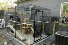 92 Desain Kandang Kucing Tingkat dari Kayu, Besi, dan Alumunium…