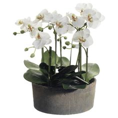 Silk phalaenopsis orchid in a clay pot.   Product: Faux floral arrangementConstruction Material: Clay and silk