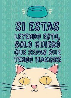 Seee Cat Quotes, Love Pet, I Love Cats, Cute Cats, Mr Cat, Grumpy Cat, Crazy Cat Lady, Crazy Cats, Funny Facts