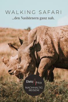 Folge den Nashörnern durch den afrikanischen Busch. Erfahre spannende Geschichten von den Rangern, die sie rund um die Uhr vor Wilderern beschützen. Trage selbst einen Teil zur Conservation Arbeit bei. Mit Elela Africa bekommst du einen Blick hinter die Kulissen eines Wildtierreservats. Bei der Safe the rhino walking safari fließen 30% des Reisepreises direkt in die Rhino-Schutz-Organisation! #nachhaltigkeit #tierschutz #artenschutz #rhinotrust #ecosafari #safari #namibia #abenteuer Safari, Walking, Africa Travel, Far Away, How To Introduce Yourself, How To Fall Asleep, Wilderness, Real Life, Namibia