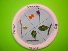 """I did this with my first graders last year and they loved it! It was part of a butterfly unit we did where students watched videos of the life cycle, learned songs about the life cycle, """"flow mapped"""" it, made this adorable life cycle craft, wrote an expository paragraph on it, and finally got to watch as real caterpillars became butterflies before their eyes! Sometimes I really miss first..."""