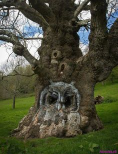 Amazing owl carved on a tree #Amazing #Animals Amazing.pk