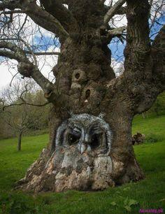 Amazing owl carved on a tree #Amazing #Animals Amazing.pk