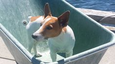 """I tried to load one more little thing onto the boat - but they said """"NO""""."""