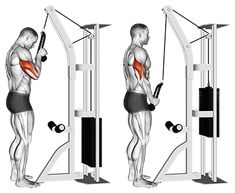 Exercise Database - Standing One Arm Tricep Pushdowns (Overhand Grip) — Jase Stuart - The Better Body Coach Workout Routine For Men, Gym Workout Videos, Workout Routines For Beginners, Gym Workouts, Swimming Workouts, Swimming Tips, Cable Machine Workout, Cable Workout, Cycling Workout