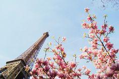 Paris blossom
