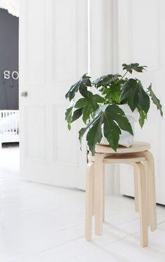Green plant and pale wood. by Ollie & Sebs Haus Interior Styling, Interior Decorating, Scandinavian Interior Design, Interior Plants, Wood Interiors, Green Life, Green Plants, Beautiful Space, Houseplants