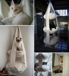 Floating beds for cats.