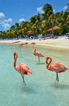 Flamingo Beach Aruba