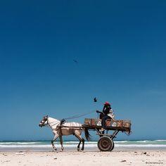馬が砂浜を駆ける  セネガルの目がさめるような景色〜レンズの向こう側