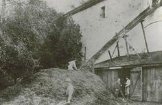 Buena Vista Wine Cellar Pomace 1865