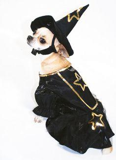 disfraz de bruja para perros