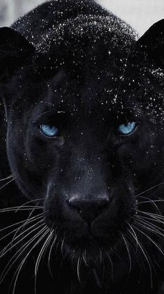 If life just threw you some struggles. You just leveled up. Jaguar Wallpaper, Wild Animal Wallpaper, Lion Wallpaper, Majestic Animals, Rare Animals, Animals And Pets, Beautiful Cats, Animals Beautiful, Beautiful Pictures