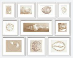 "TROWBRIDGE - Shell Collection  82""w x 62""H"
