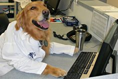 This is Neville! He's updating medical records on the patients he's seen today while drinking his morning coffee. After that, he'll be calling the referring vets to let them know how their patients are doing. Neville's one of the best doggy vets we've had!