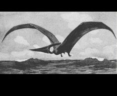 Pteranodon  by Heinrich Harder (1858-1935)  from Scientific American  1913 United States