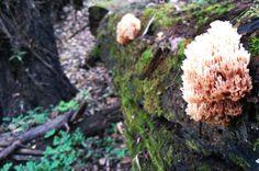 Unknown yellow fungi