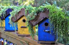 "Living-roof Birdhouses - ""The Cottage"""