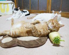 かご猫 Blog 大根まくら #kagoneko