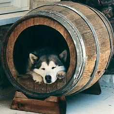 Diy dog house - SO CUTE! Lol now where do you find a barrel just laying around??