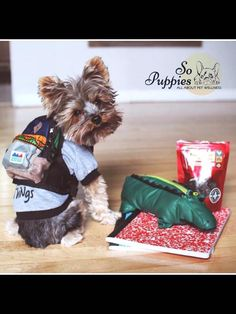 #backtoschool #backpack Dog Life, Back To School, Teddy Bear, Toys, Backpack, Puppies, Animals, Animais, Animales