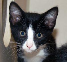Cats & Kittens | MATT  Petprojectfoundation.org