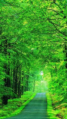 110 Best Nature Wallpaper images  Nature wallpaper, Nature, Wallpaper