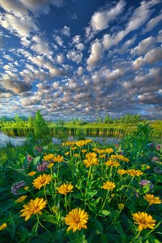 Sing For The Day - Wisconsin Horizons By Phil Koch. http://phil-koch.artistwebsites.com