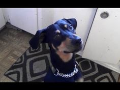 "Cute Dogs Saying ""I Love You"" Compilation 2013 www.sta.cr/2BVK5 #furbabylove #iloveyou"