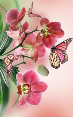 58 best Butterfly Iphone Wallpaper pictures in the best available resolution. Butterfly Drawing, Butterfly Flowers, Beautiful Butterflies, Flower Art, Beautiful Flowers, Beautiful Bugs, Pink Flowers, Orchid Wallpaper, Butterfly Wallpaper