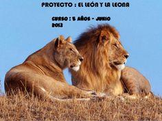 PROYECTO : EL LEÓN Y LA LEONACurso : 5 años – Junio2013