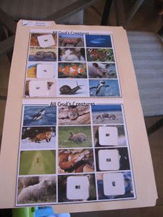 Day 6 - Animal board, cards have tiny version on with magnifying glass to look at.