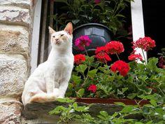 Cat in window, France