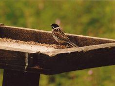 img030   Flickr - Photo Sharing!...sparrow