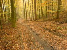 Mountainbike route Heverlee, Vlaams Brabant