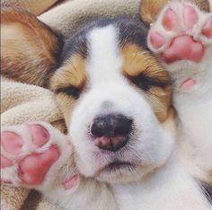 puppy dog needs cuddles